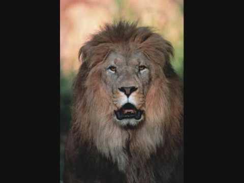 En men ett lejon 3