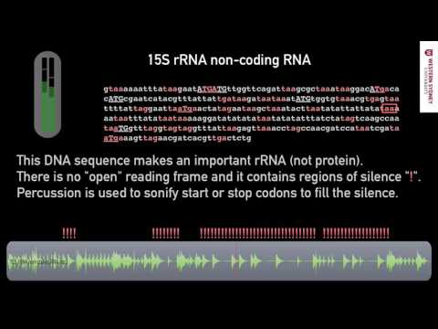 What does DNA sound like?  06 Non Coding Sequence