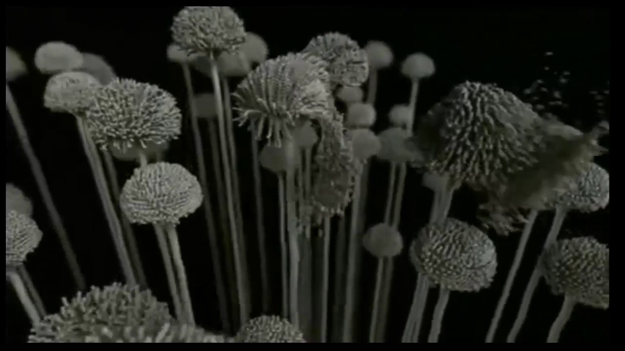 ПЛЕСЕНЬ Aspergillus аспергиллус - YouTube