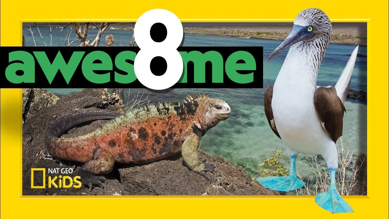 Greatest Animals of the Galápagos | Awesome 8