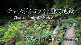 神秘の苔 コケ好きなら一度は行ってみたい チャツボミゴケ公園穴地獄 上信越高原国立公園 芳ヶ平湿地群 Chatsubomigoke Park  Anajigoku