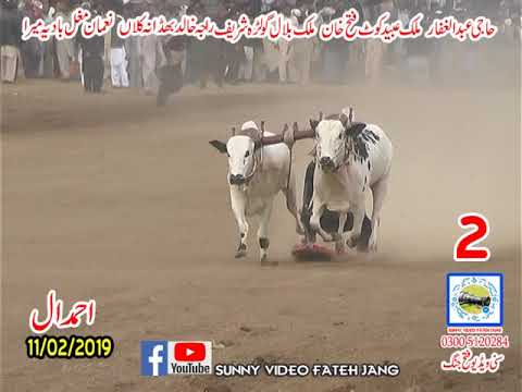 Bul Race In Pakistan Sunny Video Fateh Jang 11 02 2019 NO2 Malik Blail