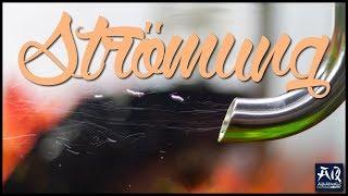 STRÖMUNG IM AQUARIUM | So optimierst du die Strömung in deinem Becken | AquaOwner