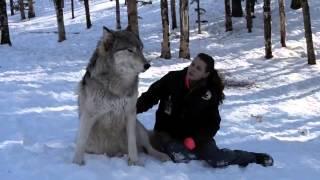 Волки Доброта