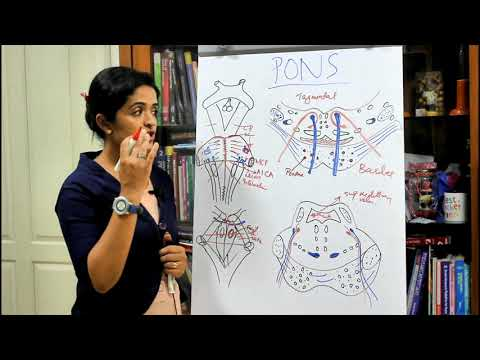 NEUROANATOMY-THE BRAINSTEM-PART 2 THE PONS-DR ROSE JOSE MD
