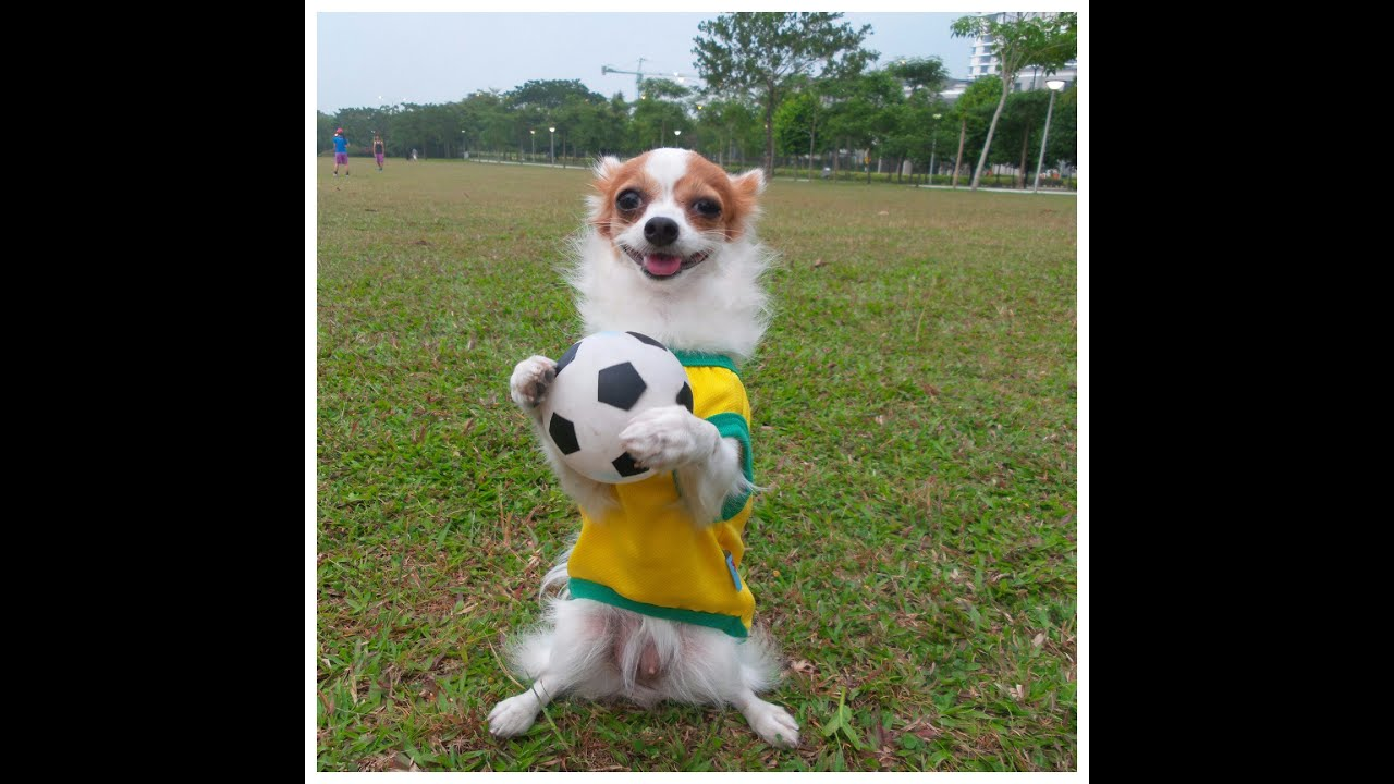 Dog footballer. Super playing. Funny animals videos - YouTube