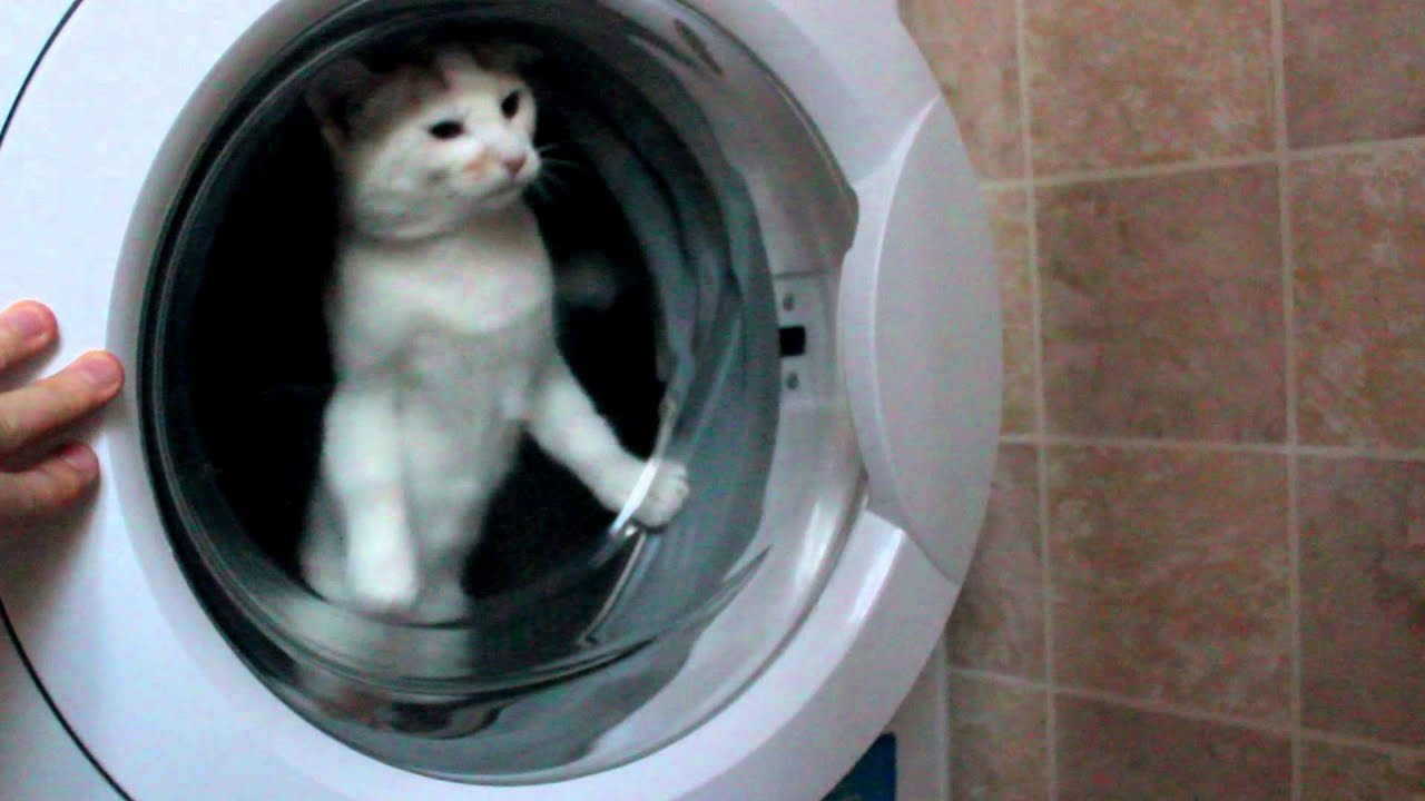 Funny Washing Machine ~ Really funny cats in the washing machine youtube