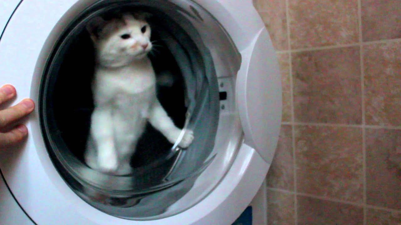 Cat Washing Machine Video