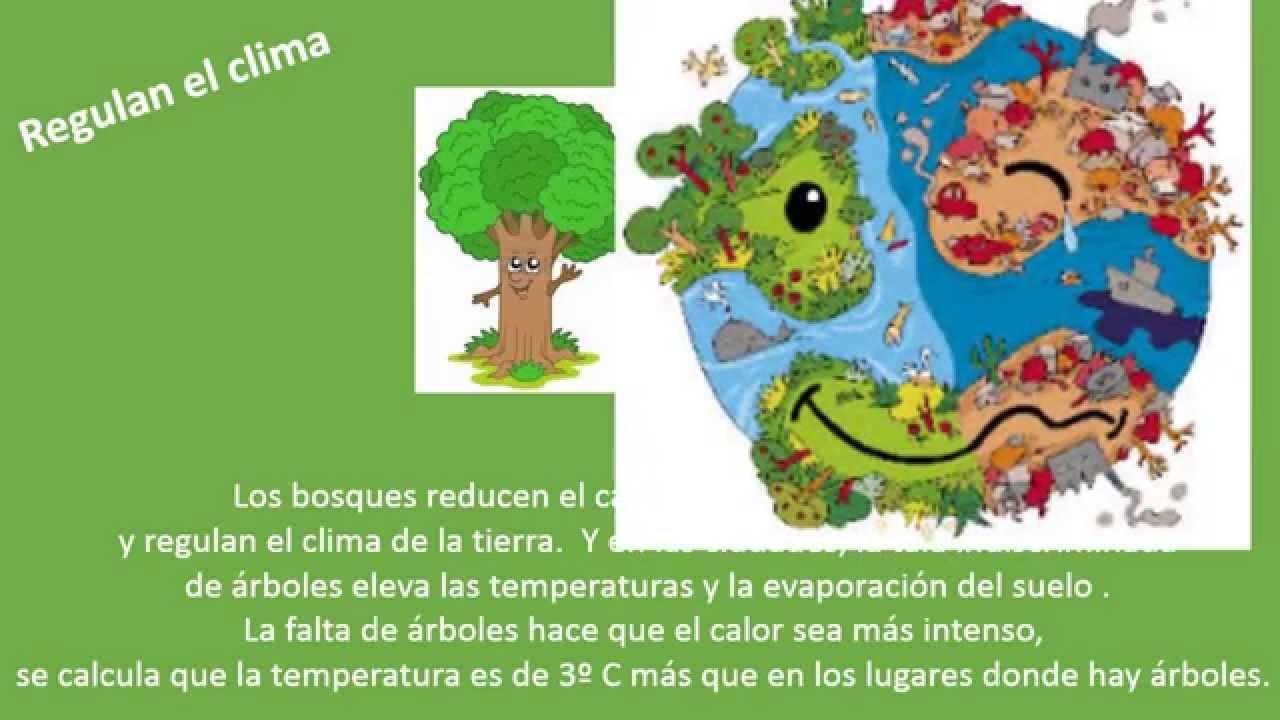 Importancia de los rboles proyecto escuela 435 youtube for Arboles y plantas para jardin