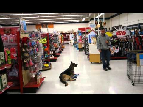 dog-training-at-a-pet-store