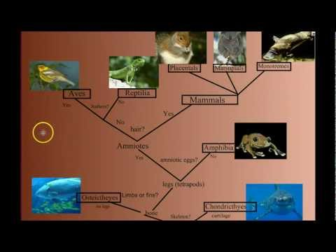 Vertebrate Diversity: An Introduction