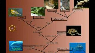 Vertebrate Diversity: An Introduction