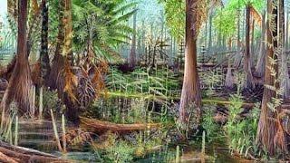 Происхождение растений. Урок биологии.