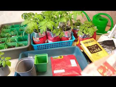 Лучшие емкости для рассады, какой объем для томатов  раннего посева