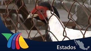 Cría de animales exóticos para comercializarlos | Noticias del Estado de México