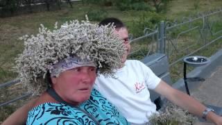 Ебунь трава или Коктебельская бабка поведунья