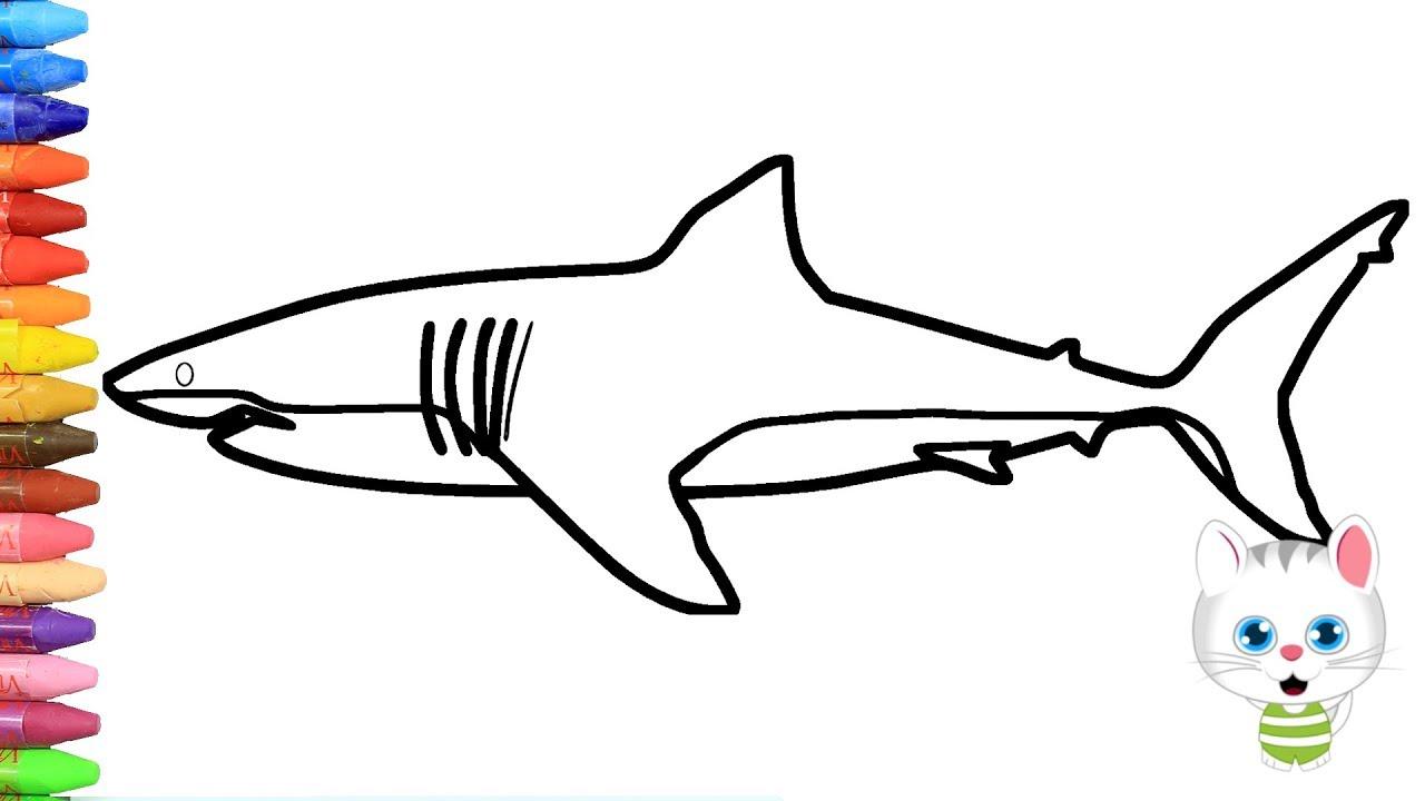Wie zeichnet man Hai  Zeichnen und Ausmalen für Kinder