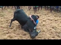 Alanganallur Jallikattu 2017 video