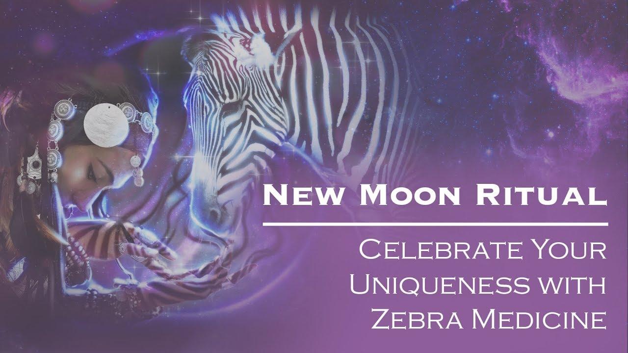 New Moon in Aquarius 2019: Celebrate Your Uniqueness with Zebra Medicine