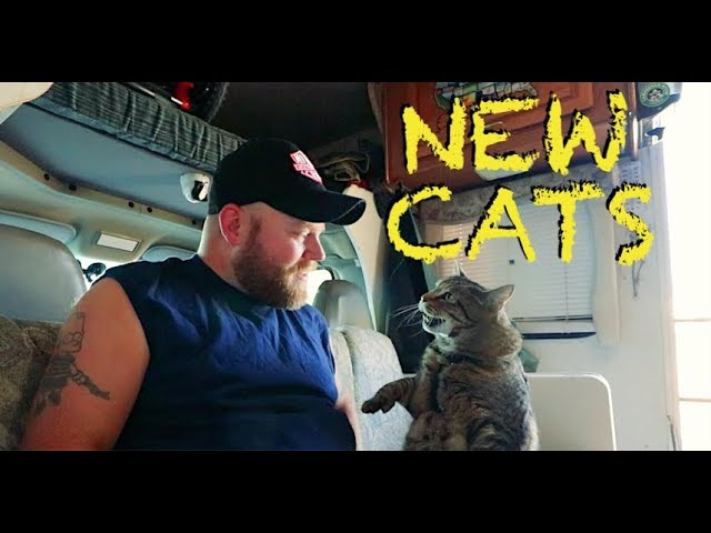 new-cats-new-sound-system-river-camping