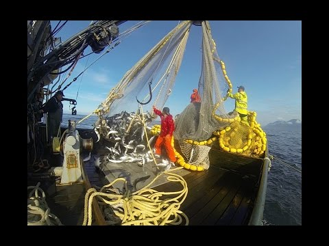 Alaska Fisherman 2016 : Purse Seining