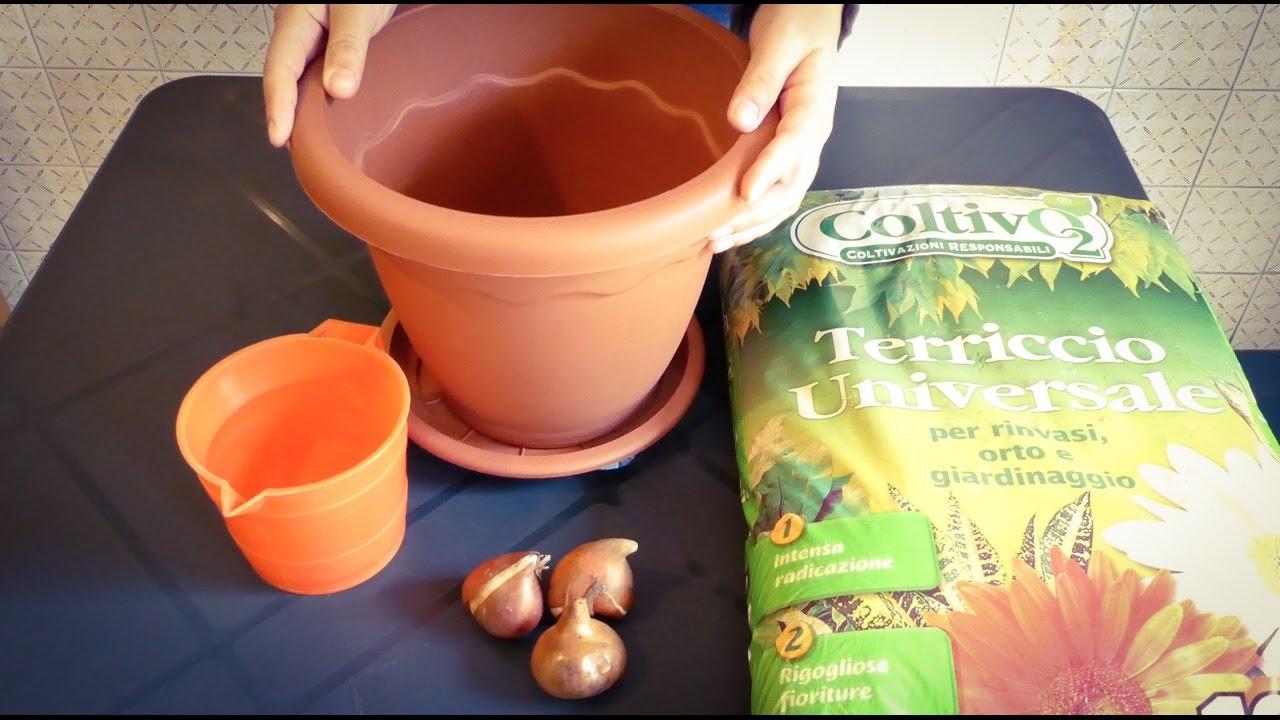 "Piantare I Bulbi Di Tulipani mini guida - ""come piantare i tulipani"""