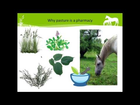 Pasture as Pharmacy for Horses