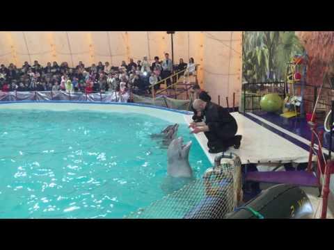 Дельфинарий в г  Назрань 3