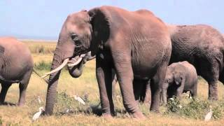 Elephants as Ecosystem Engineers