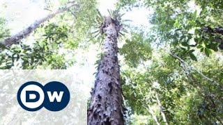 Zwischen Wirtschaftswachstum und Umweltschutz | Global 3000