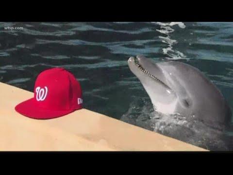 Lisa Berigan - LISA'S ANIMAL TALES: DOLPHIN PREDICTS NATS WILL WIN WORLD SERIES (Video)