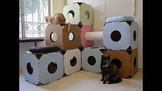 Почему кошки любят картонные коробки  Приколы с котами  Факты о кошках