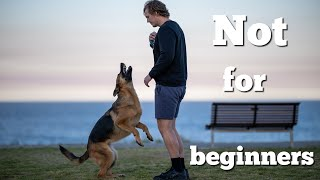 5 things to know before getting a German Shepherd