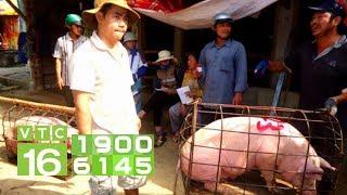 Giá lợn tăng phi mã, làm sao để bình ổn? | VTC16