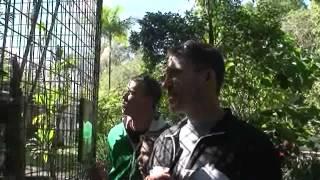 Too many Kookaburras
