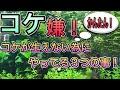 【アクアリウム】簡単!!コケが生えない為にやっている3つの事!!【水草水槽】【…