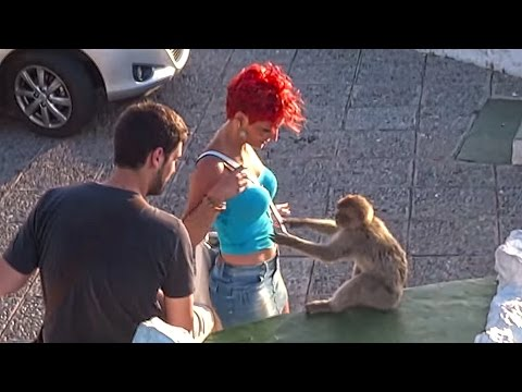 Rock of Gibraltar funny Monkeys & Tourists 2015 and best observation