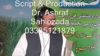 Soil analysis for rice cultivation  Pakistan Dr. Ashraf Sahibzada