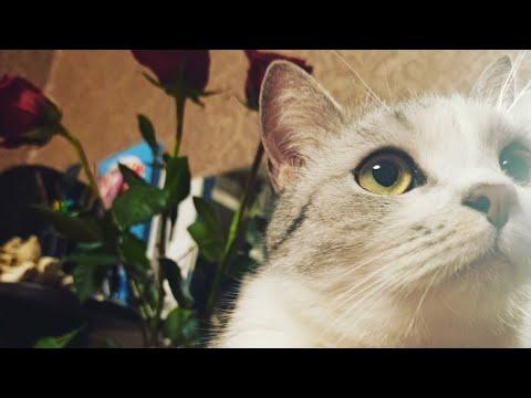 не стандартный МУКБАНГ кота 😽 весна 🌱. витамины  для кота. Знакомство с моим помощником.