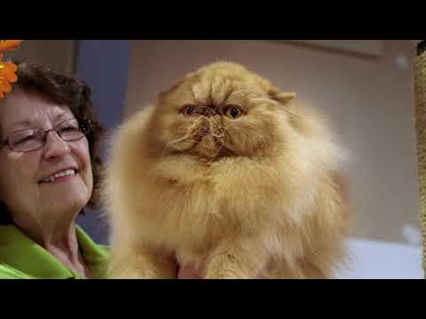 Catwalk: Tales From The Cat Show Circuit | Trailer