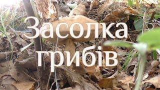 Засолка грибів
