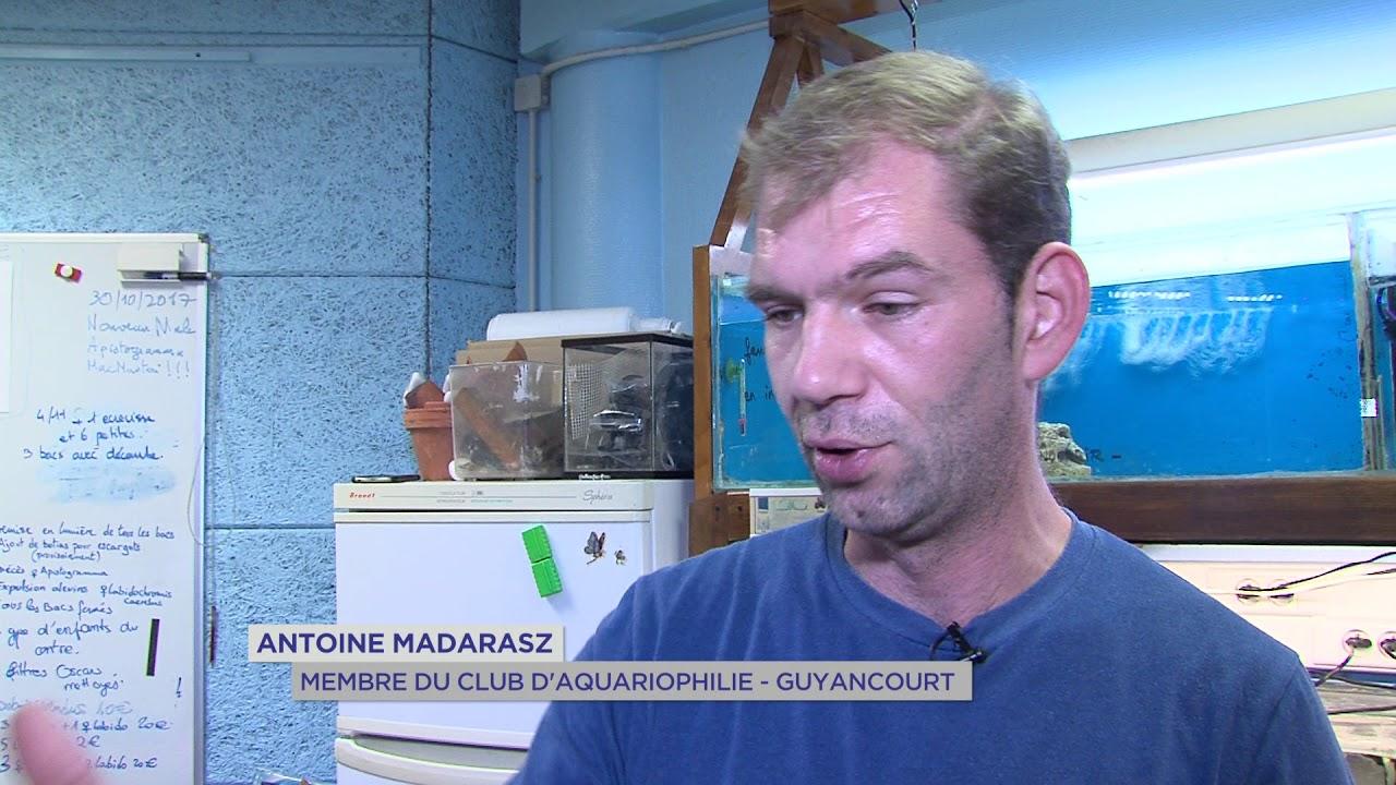 guyancourt-decouvrez-club-daquariophilie