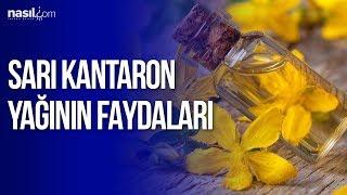 Sarı kantaron yağının faydaları | Sağlık | Nasil.com