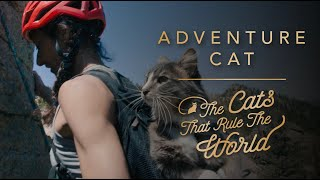 EP 3   ADVENTURE CAT, DENALI   THE CATS THAT RULE THE WORLD   SHEBA®