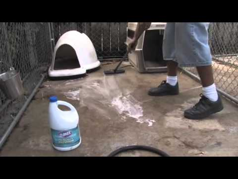 Ways To Clean Your Dog Kennel Dog S Health Youtube