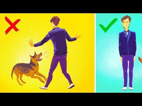 Qué hacer si te ataca un perro