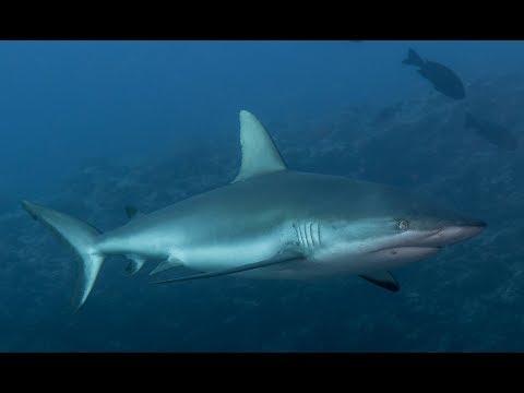 Diving Palau 2017 with Siren Fleet/BlueOTwo (LONG VERSION)