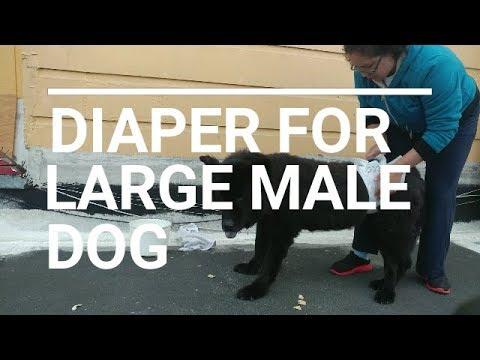 Diy Dog Diaper Myhiton