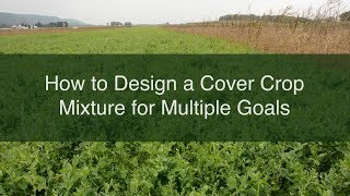 How to Design a Cover Crop Mixture for Multiple Goals