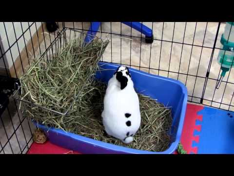 Rabbit Exercise Pen and New Hay Rack